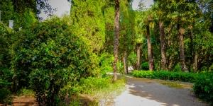 Вечнозеленый парк в Симеизе