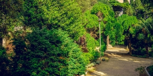Симеизский парк