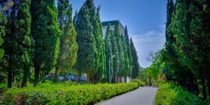 Кипарисы в Симеизском парке