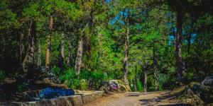 Вечнозеленая природа Симеиза