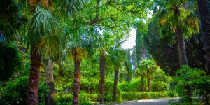 Парк в Симеизе