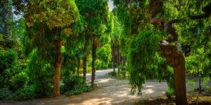 Симеиз, парк