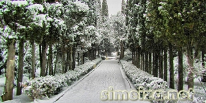 Парк в засыпало снегом