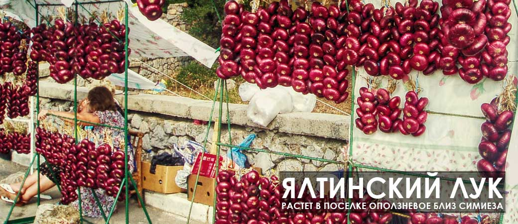 лук крымский фото