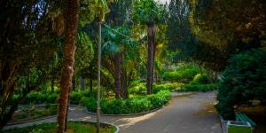 Пальмовая аллея в парке Симеиза