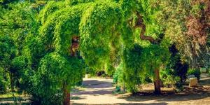 В Симеизском парке